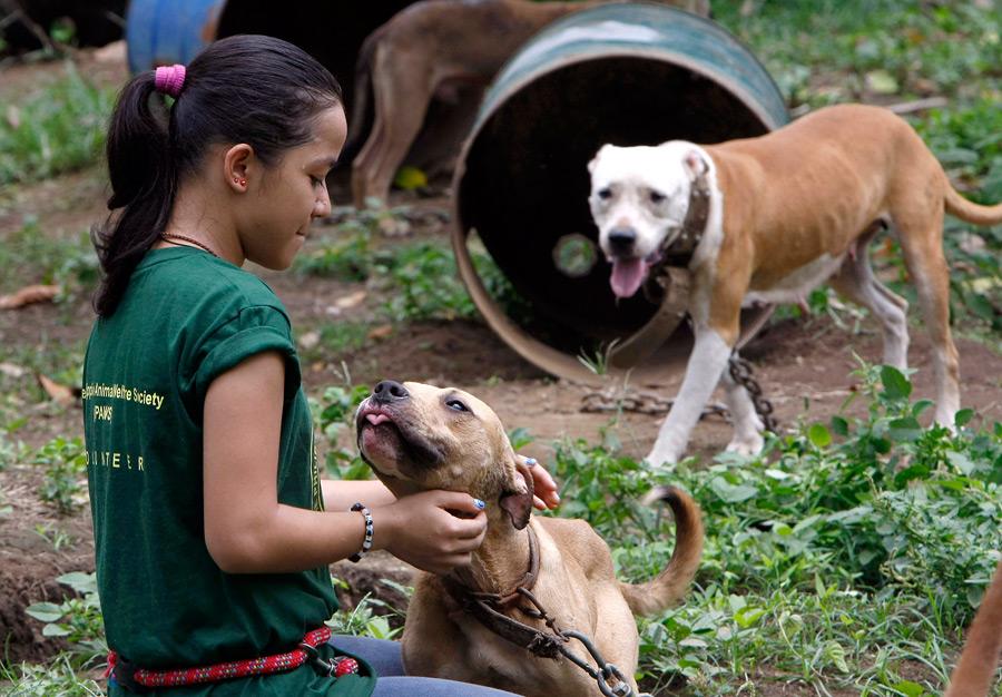 dogs03 На Филиппинах защитники животных обнаружили собачий концлагерь
