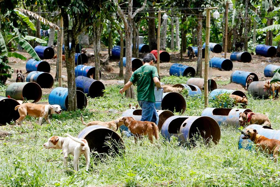 dogs04 На Филиппинах защитники животных обнаружили собачий концлагерь