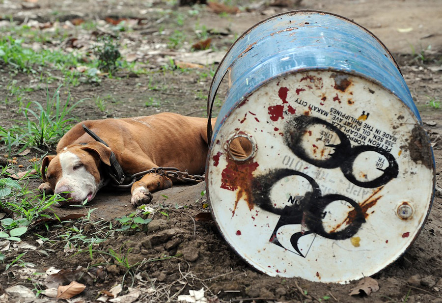 dogs09 На Филиппинах защитники животных обнаружили собачий концлагерь