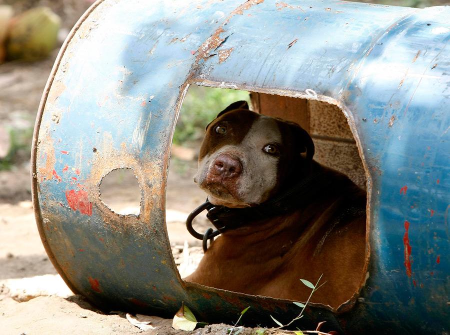 dogs14 На Филиппинах защитники животных обнаружили собачий концлагерь