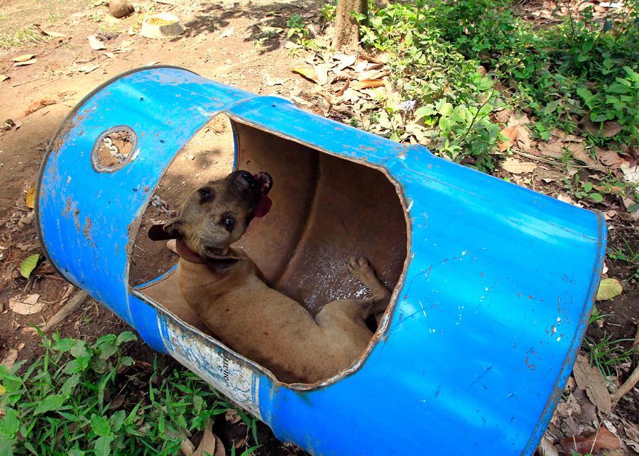 Dogs16 на филиппинах защитники животных
