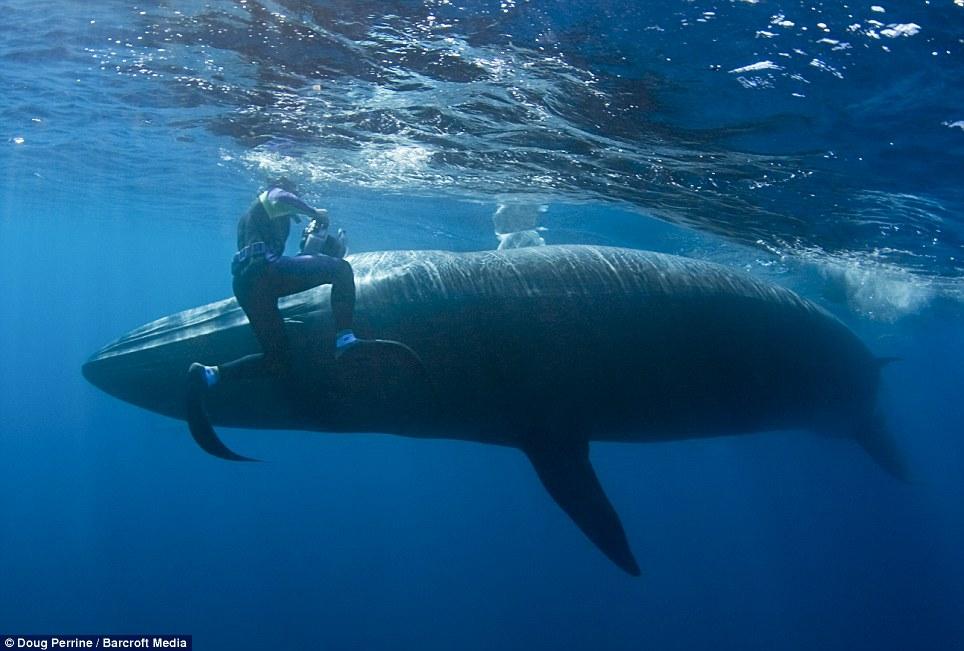 eTv8Wbj5 Обедающий китедва непроглотил фотографа