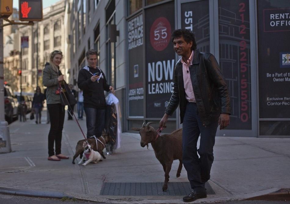 enhanceu Коза на улицах Нью Йорка