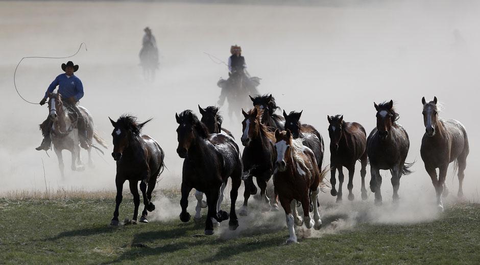 05Montanamontana horse012 Последние ковбои