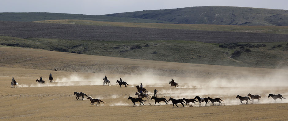06Montanamontana horse014 Последние ковбои