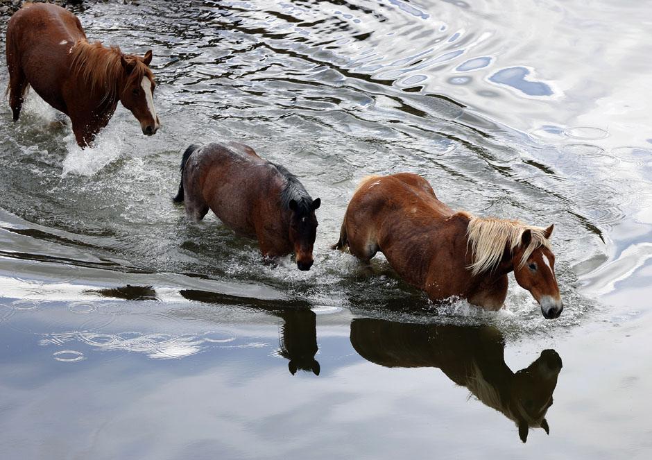 08Montanamontana horse018 Последние ковбои