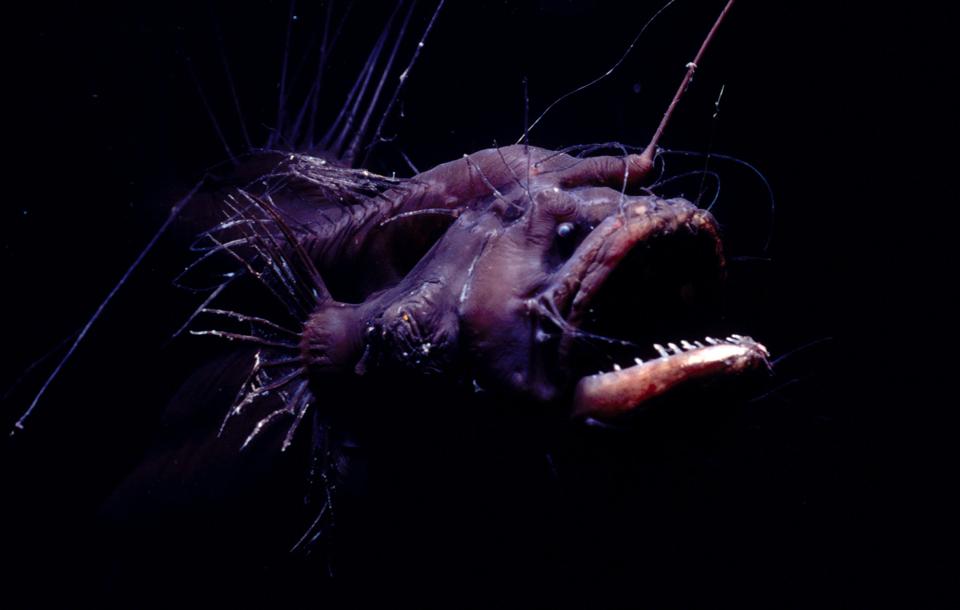 10148 Обитатели морских глубин