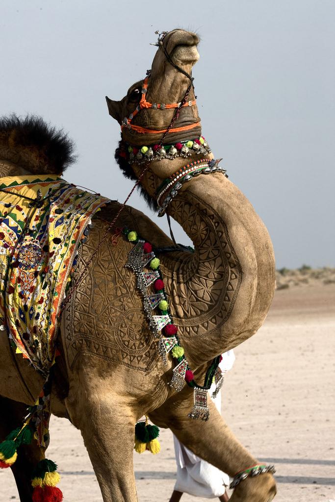 10159 Верблюжий арт