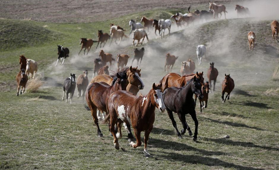 10Montanamontana Horses 18045 ju Последние ковбои