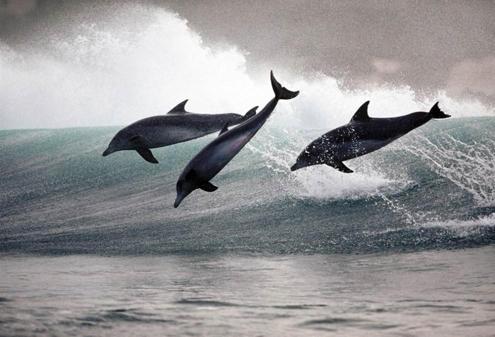 11 990x674 Танцы дельфинов