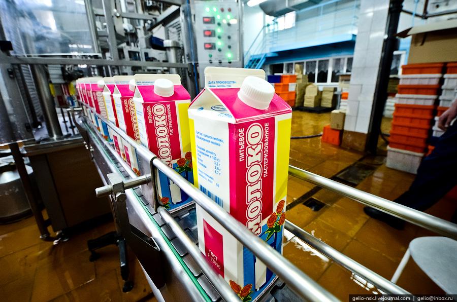 11114 Производство молока: Племзавод Ирмень в Новосибирской области