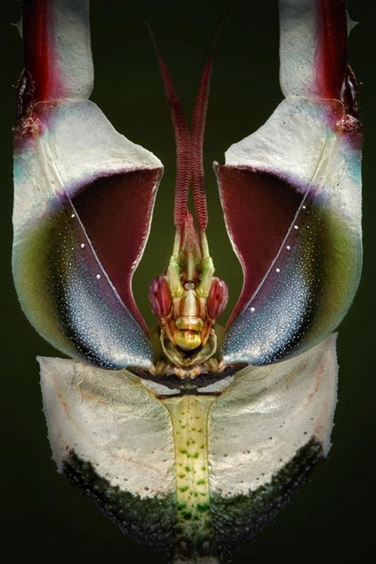 11120 الحشرات عيون إيغور Sivanovicha