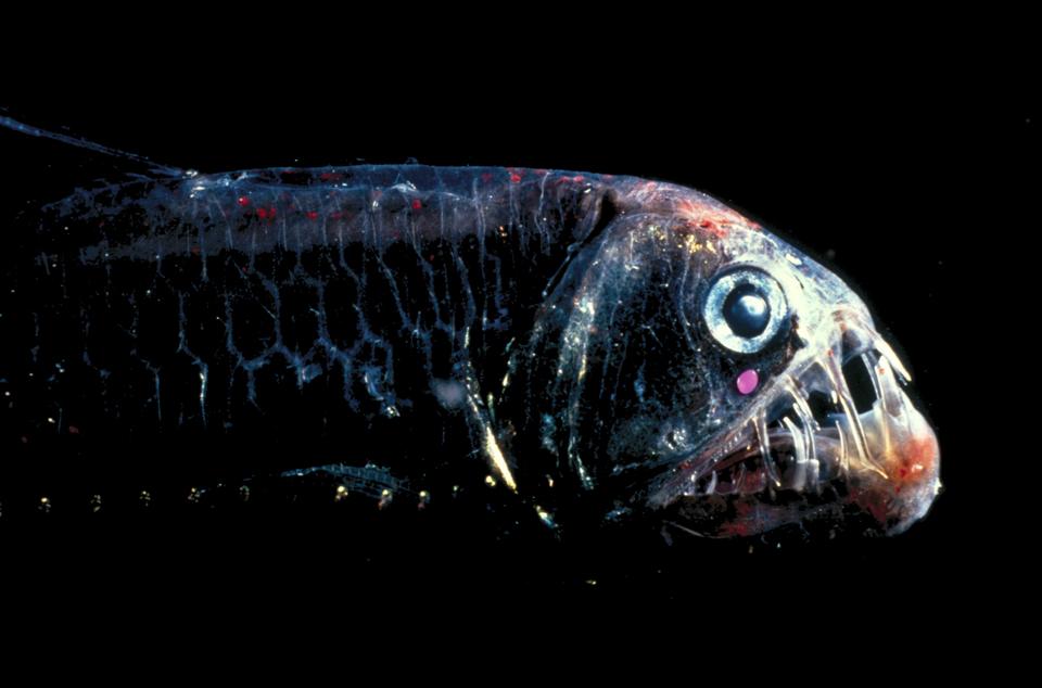 11181 Обитатели морских глубин