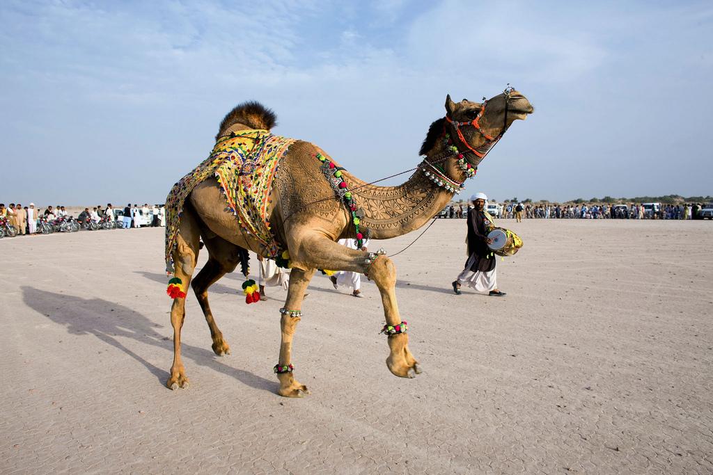 11192 Верблюжий арт