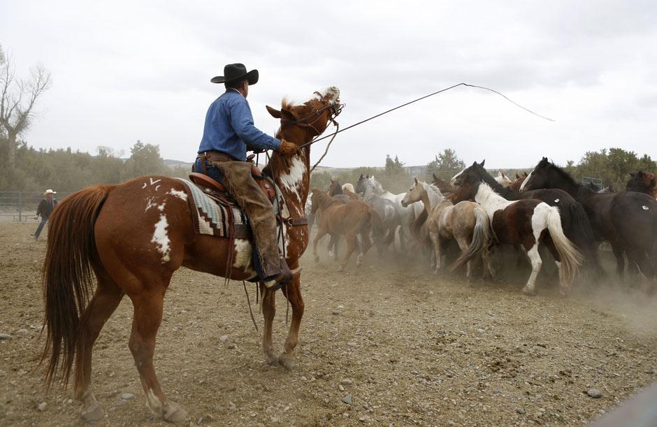11Montanamontana horse023 Последние ковбои