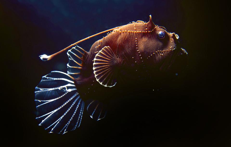 12155 Обитатели морских глубин