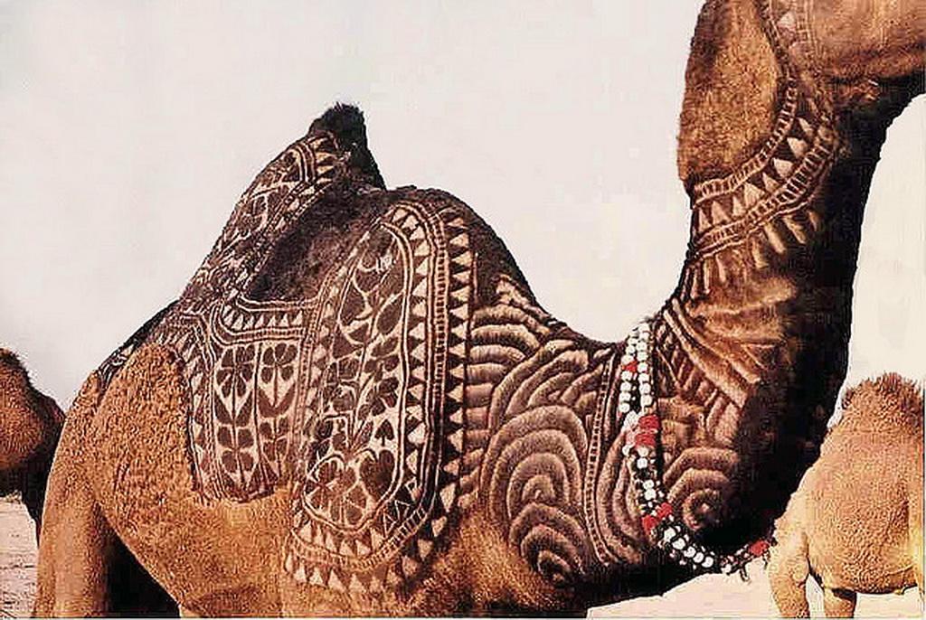 12165 Верблюжий арт