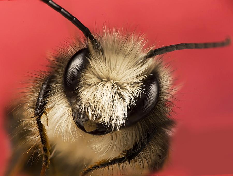 12172 Макро насекомые