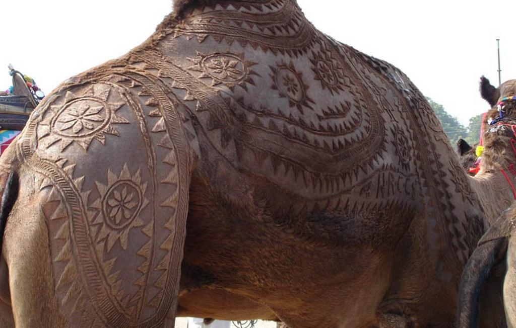 13141 Верблюжий арт