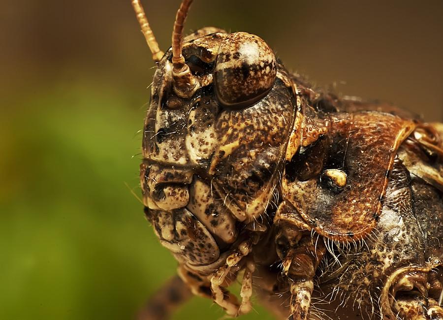 13146 Макро насекомые