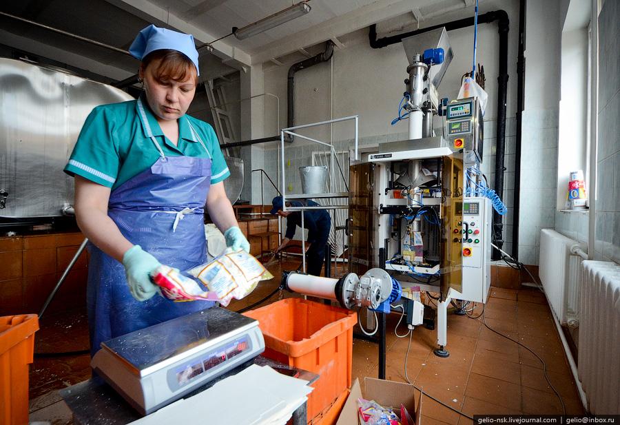 1363 Производство молока: Племзавод Ирмень в Новосибирской области