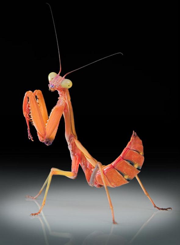 1369 عيون الحشرات إيغور Sivanovicha