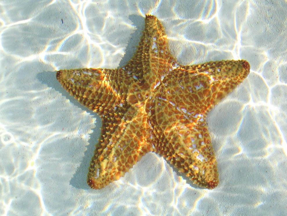 1384 Морская звезда