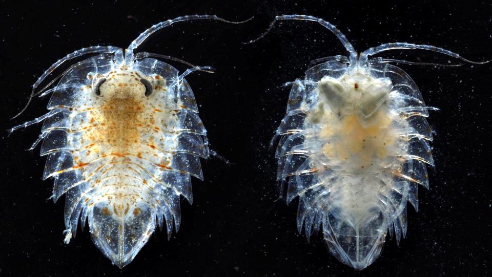 14122 Обитатели морских глубин