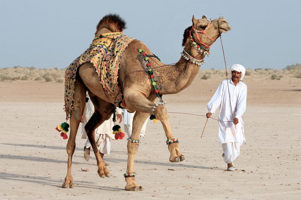 14129 Верблюжий арт
