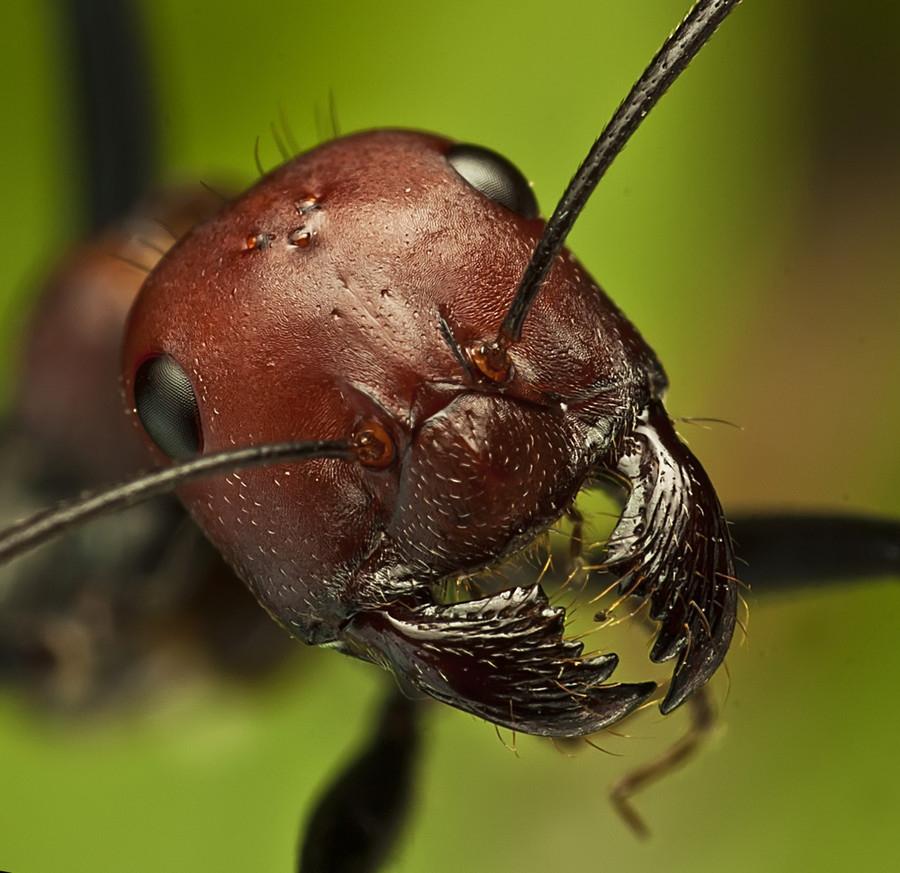 14134 Макро насекомые