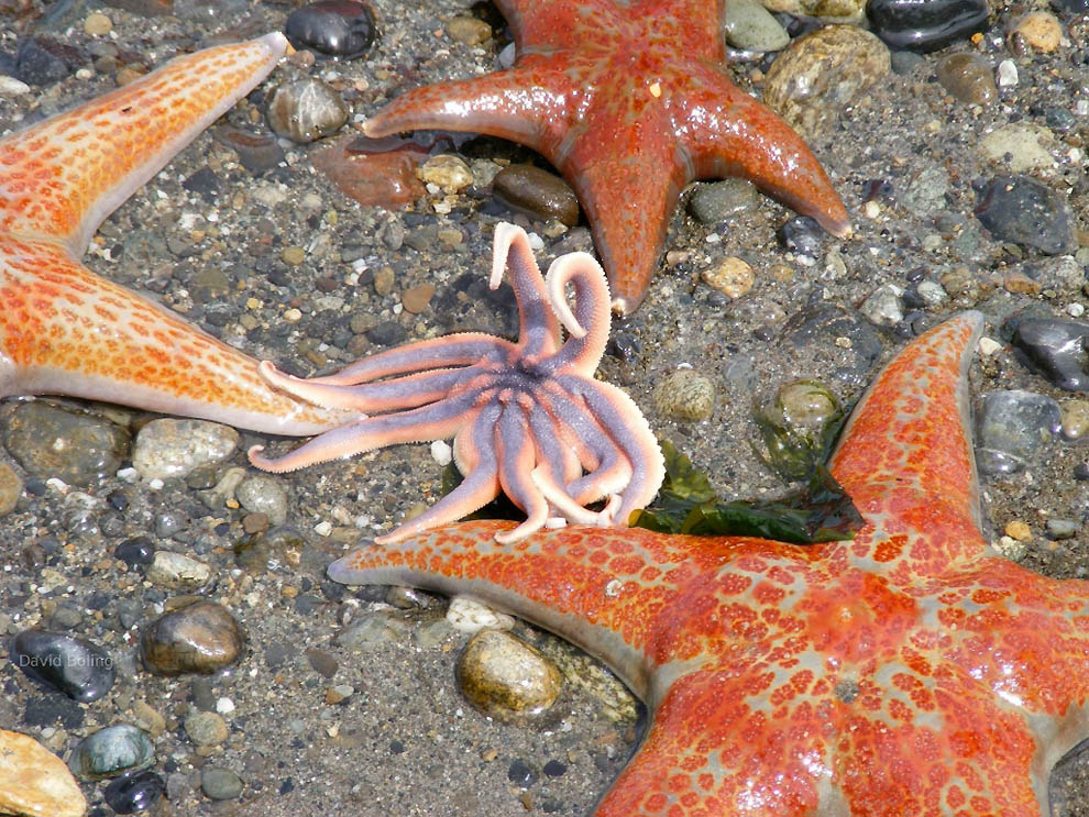 1479 Морская звезда
