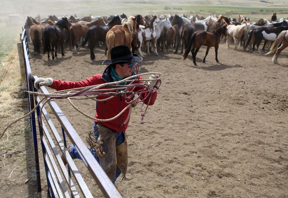 14Montanamontana horse031 Последние ковбои