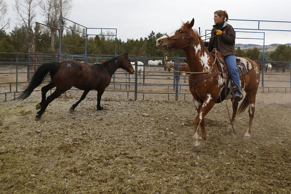 15Montanamontana horse033 Последние ковбои