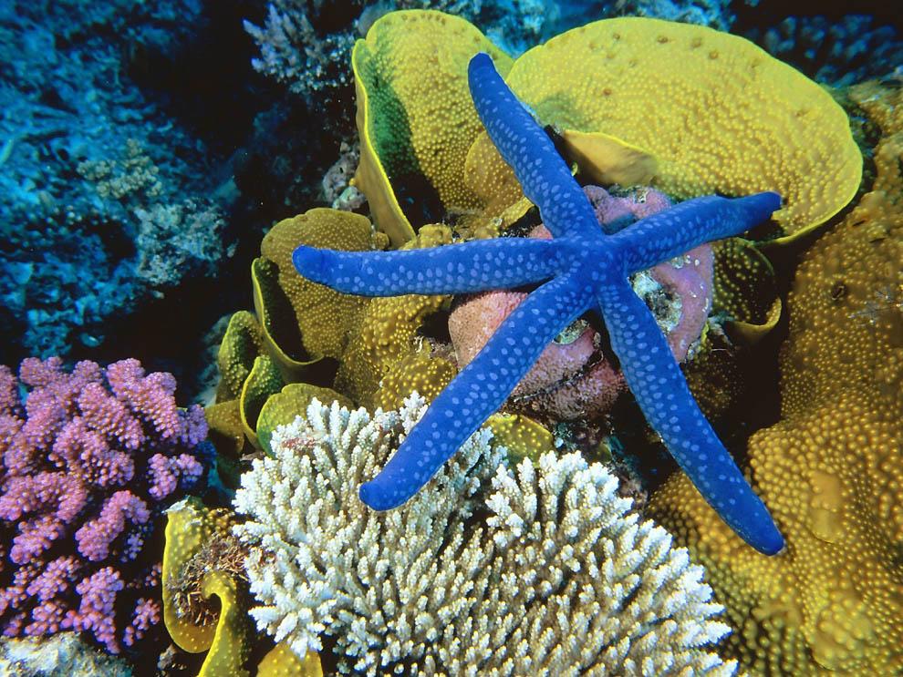1666 Морская звезда
