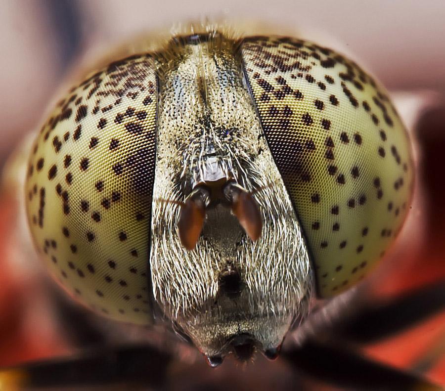 17105 Макро насекомые