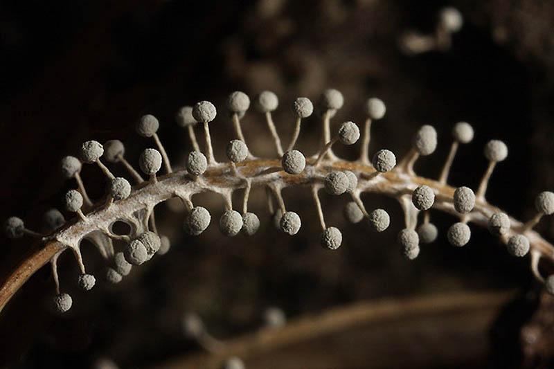 1778 Слизевые грибы
