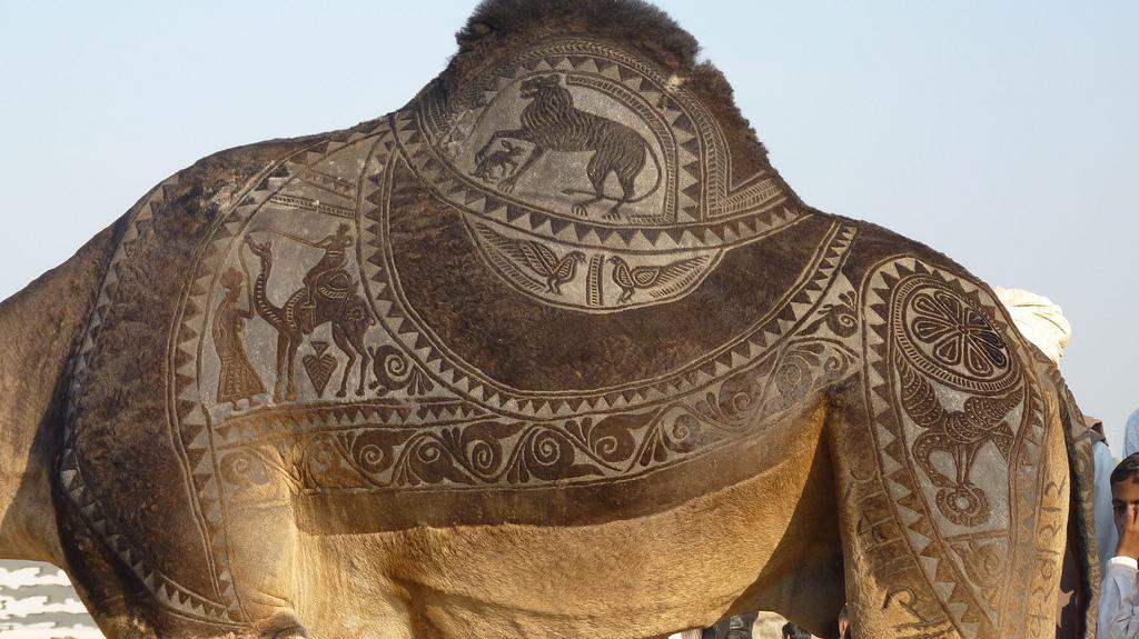 1808 Верблюжий арт