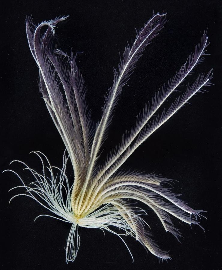 1883 Обитатели морских глубин
