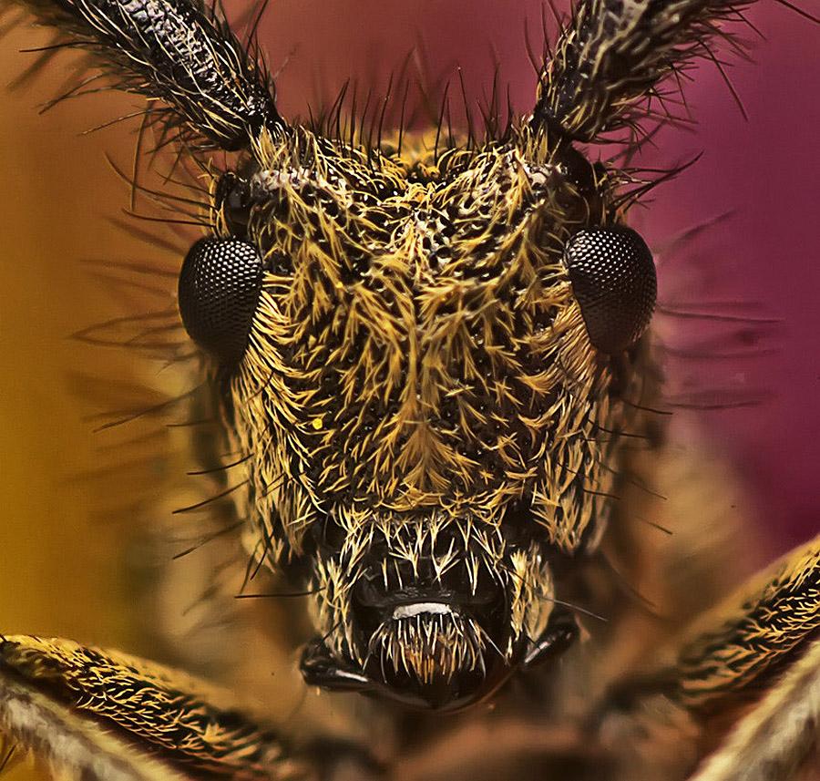 1894 Макро насекомые