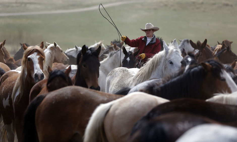 18Montanamontana horse035 Последние ковбои