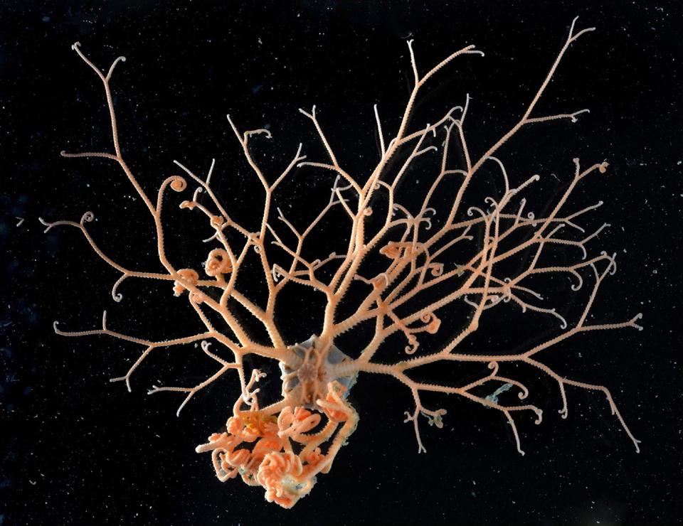 1977 Обитатели морских глубин