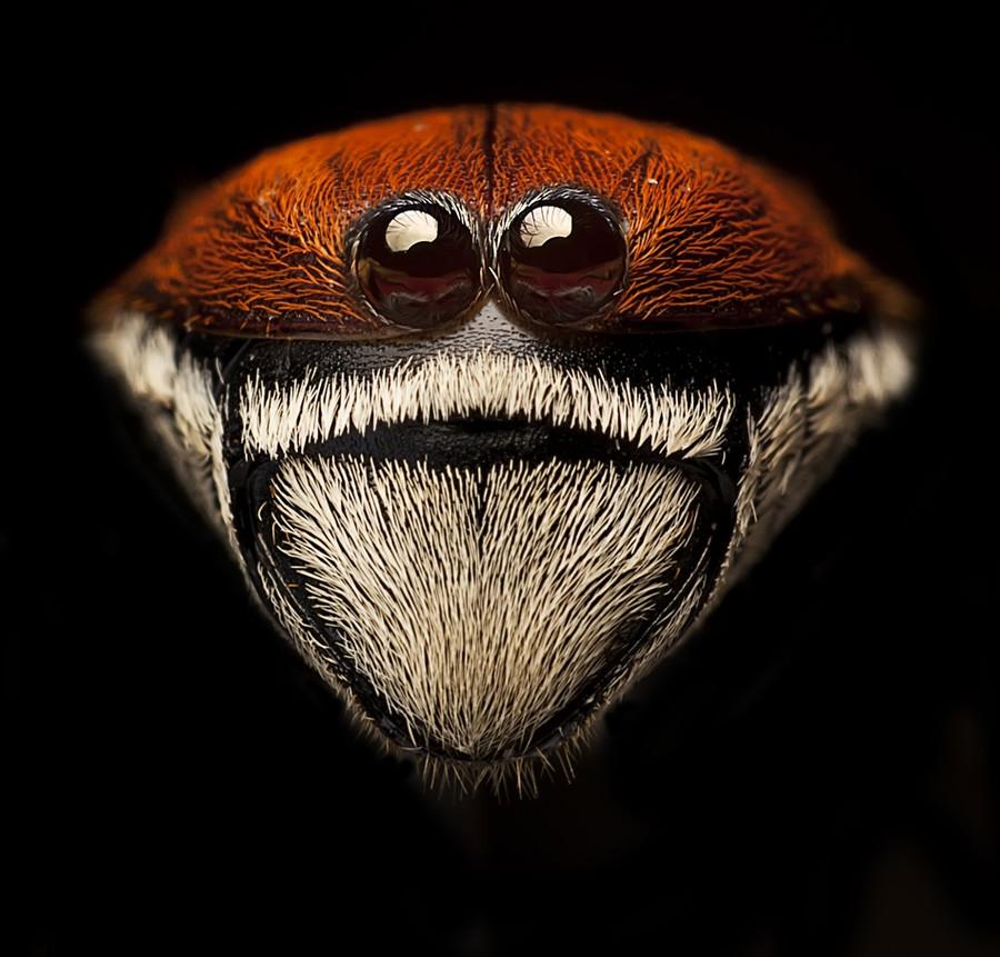 1981 Макро насекомые