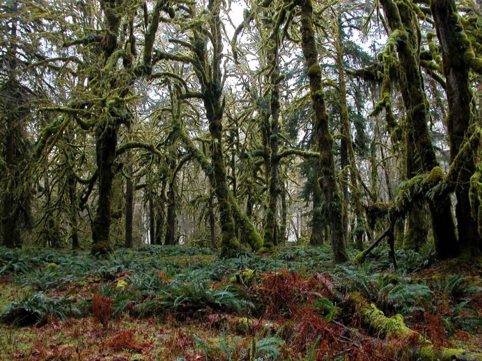 2013 Национальные парки США