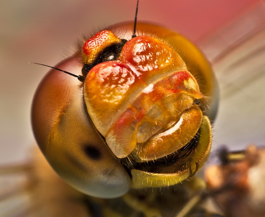 2076 Макро насекомые