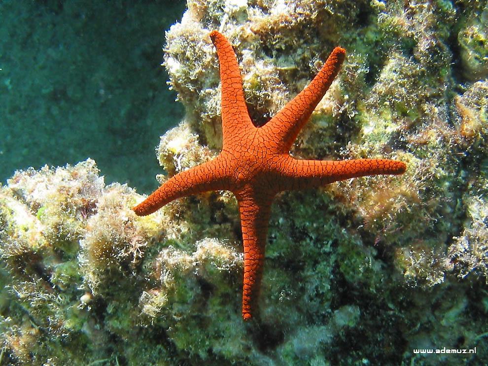 21101 Морская звезда