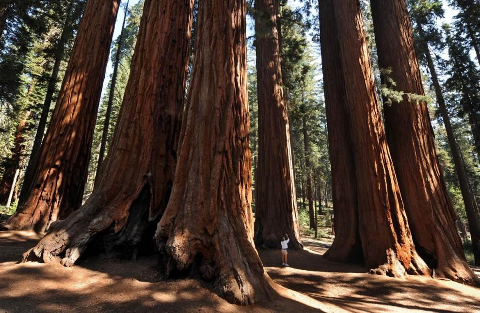 2118 Национальные парки США