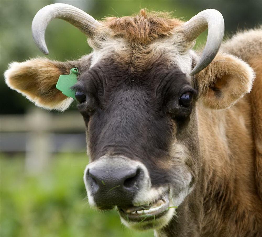 2124 Животные, которые умеют смеяться