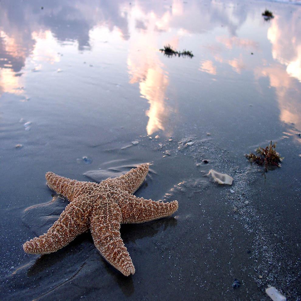 2204 Морская звезда