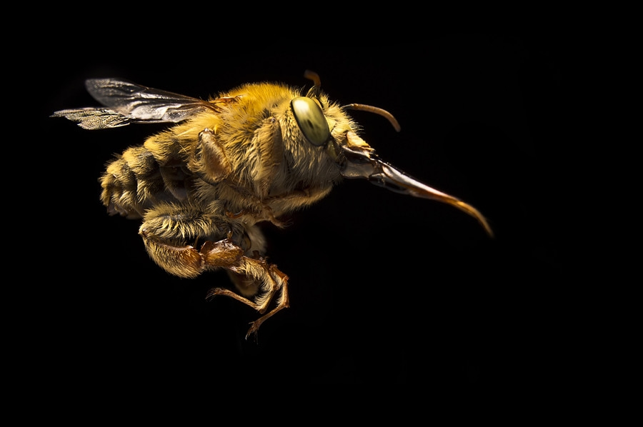 22101 Макро насекомые