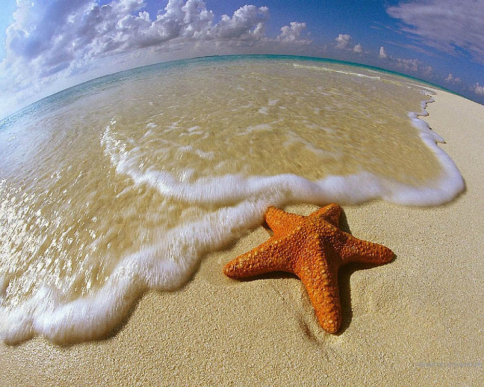 2243 Морская звезда